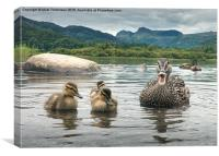 Mother & Ducklings, Canvas Print