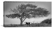 A COW UNDER A TREE, Canvas Print