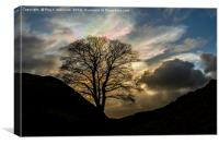 Sycamore Gap Silhouette, Canvas Print