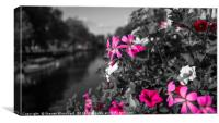 Canal side flowers, Canvas Print