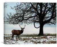 Richmond Park Deer, Canvas Print