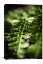 Macro fern leafe, Canvas Print