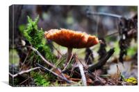 Autumn fungus, Canvas Print