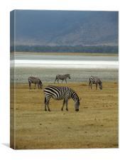 Wild Zebras on a lake, Canvas Print
