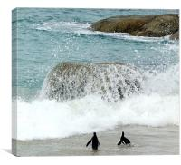 Penguins at Hermanus Cape Town, Canvas Print