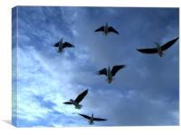 Sea Gulls in the dark blue sky, Canvas Print