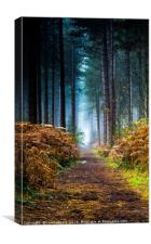 Fog in the woods, Canvas Print