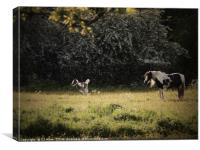 Horse and Foal, Canvas Print