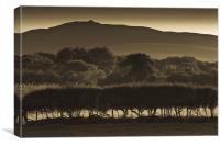 Summer hills, Canvas Print