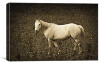 White horse in meadow, Canvas Print