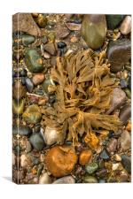 Seaweed and pebbles, Canvas Print