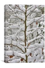 Tree branches covered in snow, Canvas Print