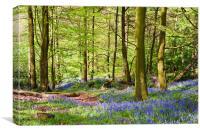 Woodland Bluebells, Canvas Print
