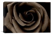 Dark Rose, Canvas Print