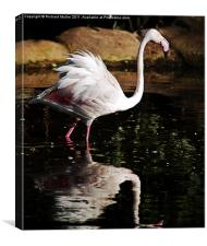 Ruffled Feathers, Canvas Print