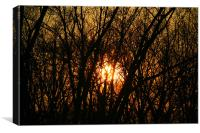 Sunset between trees, Canvas Print