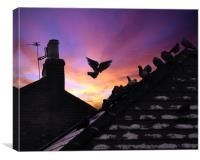 sunset pidgeons, Canvas Print