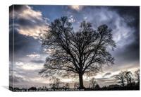 Sunset Tree, Canvas Print