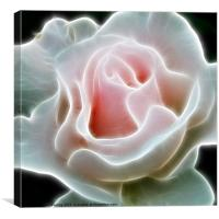 Pink Rose, Canvas Print