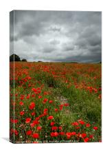 Poppies before the Storm, Canvas Print