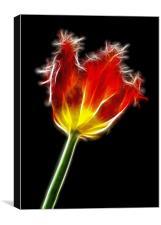 Parrot Tulip, Canvas Print