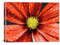 Strawberry Plant, Canvas Print
