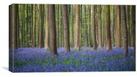 Bluebell wood of Hallerbos, Canvas Print