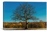 Mighty oak tree in winter, Canvas Print