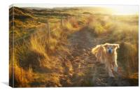 Dune Dog, Canvas Print