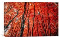 Red Forest of Sunlight, Canvas Print