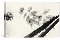 Forgotten Leaves on Plastic, Canvas Print