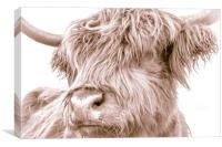 Hairy Coo Collection 5 of 7, Canvas Print