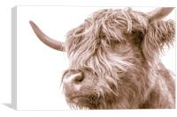 Hairy Coo Collection 7 of 7, Canvas Print