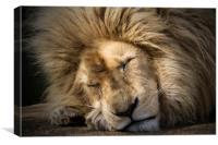The Lion Sleeps Tonight, Canvas Print