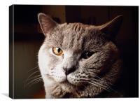"British Blue Shorthair Cat ""Lunar"", Canvas Print"