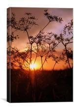 Winters Sunset in Faversham, Canvas Print