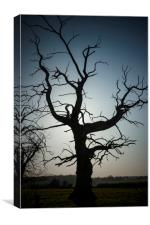 Lonely Dead Tree, Canvas Print