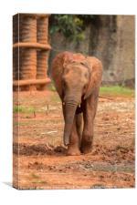 Baby  ช้างไทย, chang , Canvas Print