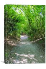 The Tree path, Canvas Print
