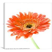 The colour Orange, Canvas Print