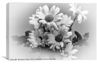 mono chrysanths, Canvas Print