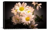 Crysanthemum colour, Canvas Print
