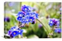 Forget-me-not, Canvas Print