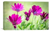 Shades of Purple and Green, Canvas Print