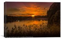 Swans at Sunrise, Canvas Print