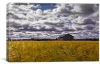 Old Barn House In The Rye Field, Canvas Print