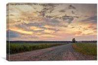 Gravel Road In The Summer Sunset, Canvas Print