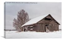 Abandoned Barn House Covered With Snow, Canvas Print