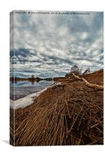 Dead Branch On The River Bend, Canvas Print