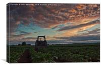 Tractor Parked On The Potato Fields, Canvas Print